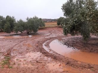 """Las borrascas """"Elsa"""" y """"Fabián"""" hace estragos en plena campaña olivarera de Castilla-La Mancha"""