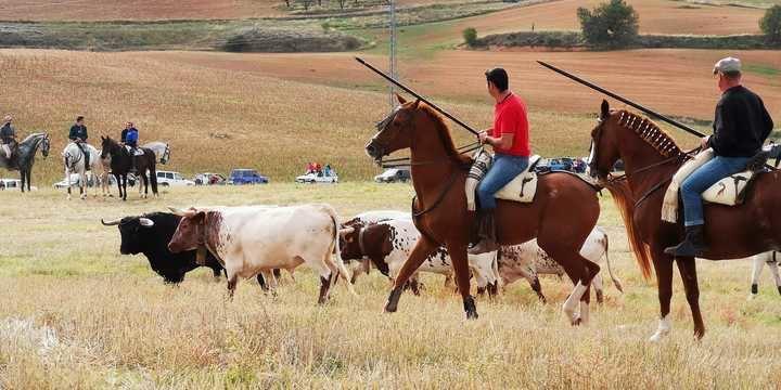 """Jadraque volvió a disfrutar de su tradicional encierro por el campo de """"El Pilar"""""""