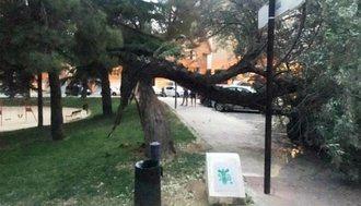 ATENCIÓN : Guadalajara estará en alerta por fuertes rachas de viento este jueves desde las 15h hasta las 21 horas