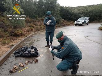 """El SEPRONA investiga un """"cementerio ilegal"""" de animales domésticos en El Casar"""