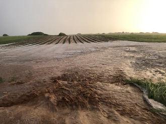 7.000 hectáreas de cosecha dañadas por las tormentas y el pedrisco en Guadalajara