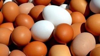 Requisan 19 docenas de huevos que iban a ser arrojados en una novatada en la Univerisdad Complutense de Madrid