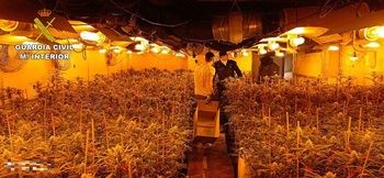 """La Guardia Civil desmantela en Illana una plantación de marihuana """"indoor"""" con más de 1.600 plantas"""