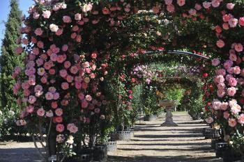 El Real Jardín Botánico de la Universidad de Alcalá amplía su horario en fines de semana y festivos
