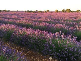 El proyecto europeo Lignobiolife, de la Universidad de Alcalá, probará sus bioproductos en las plantaciones de aromáticas de Brihuega