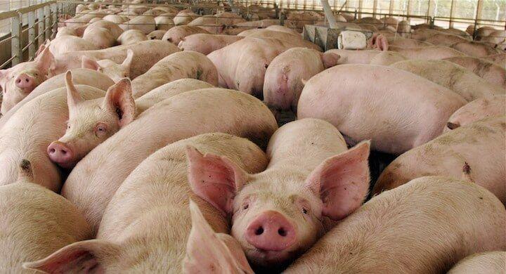 ASAJA alerta que las ayudas que el Ministerio de Agricultura ha anunciado dejarán fuera al 95% de los ganaderos de ovino y caprino de la región