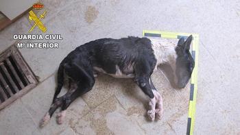 La Guardia Civil investiga a un vecino de Brihuega por un delito de maltrato animal