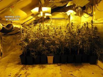La Guardia Civil detiene a cinco personas por un delito de cultivo de marihuana en Seseña