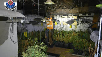 Siete detenidos por cultivo y tráfico de marihuana en Guadalajara y Euskadi