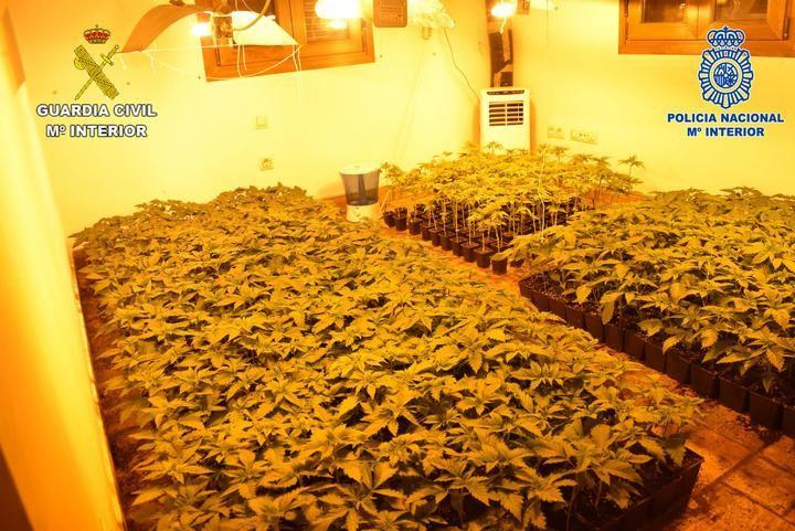 """Intervenidas en Guadalajara más de 5.500 plantas de marihuana a una banda organizada que se dedicaba al cultivo ilegal mediante plantaciones """"Indoor"""""""