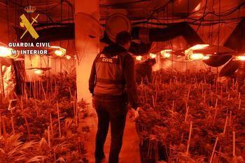 La Guardia Civil desmantela una plantación de marihuana en Pepino con 2.312 plantas