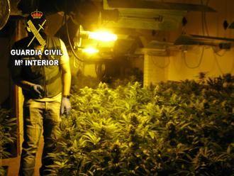"La Guardia Civil desmantela dos plantaciones de marihuana ""indoor"" en Torrejón del Rey"