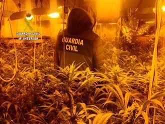 """La Guardia Civil desmantela una plantación de marihuana """"indoor"""" en Valdeaveruelo"""