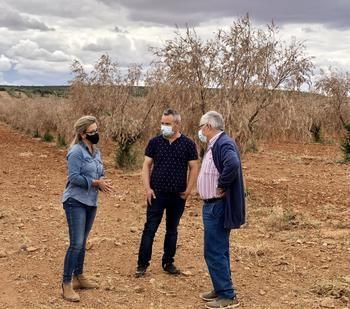 Merino reclama a Page que se deje de `anuncios y postureos malintencionados´ y atienda de una vez las reivindicaciones de los agricultores de CLM afectados por Filomena
