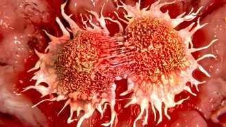 El científico español Joan Massagué descifra el origen de la metástasis del cáncer
