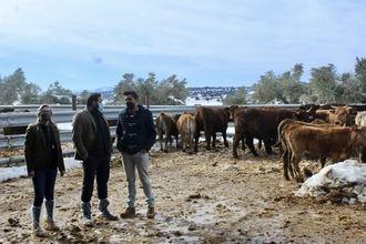 Paco Núñez muestra su apoyo a los GANADEROS de Castilla-La Mancha tras los problemas que les ha causado el temporal de nieve
