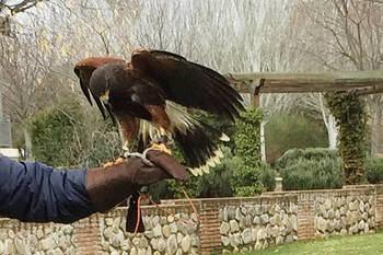 Adjudicado el servicio de control integral de población de palomas y cotorras de Azuqueca