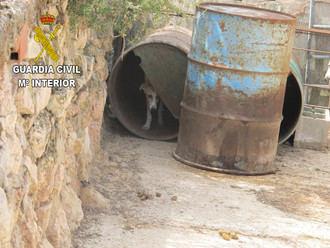 El Seprona localiza 55 perros en una explotación agrícola en Moratilla de Henares incumpliendo la legislación de bienestar animal