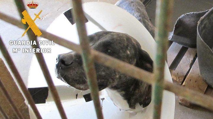 Un vecino de Torija imputado por un presunto delito de maltrato animal, tras abandonar un perro