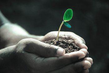La evolución de las plantas, una fuerza generadora de bienestar