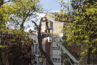 Guadalajara continúa con las podas indiscriminadas que dañan y enferman el arbolado urbano