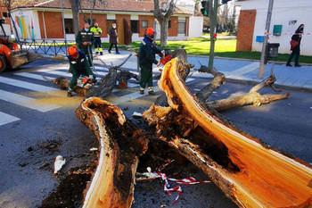 El Ayuntamiento de Azuqueca acomete la poda de los árboles con daños irreparables por la borrasca Filomena
