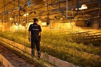 """Agentes de la Policía Nacional de Guadalajara desmantela un cultivo """"indoor"""" con 2.805 plantas de marihuana"""