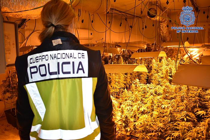 La Policía Nacional desarticula en Guadalajara una organización criminal dedicada al cultivo y distribución de cannabis