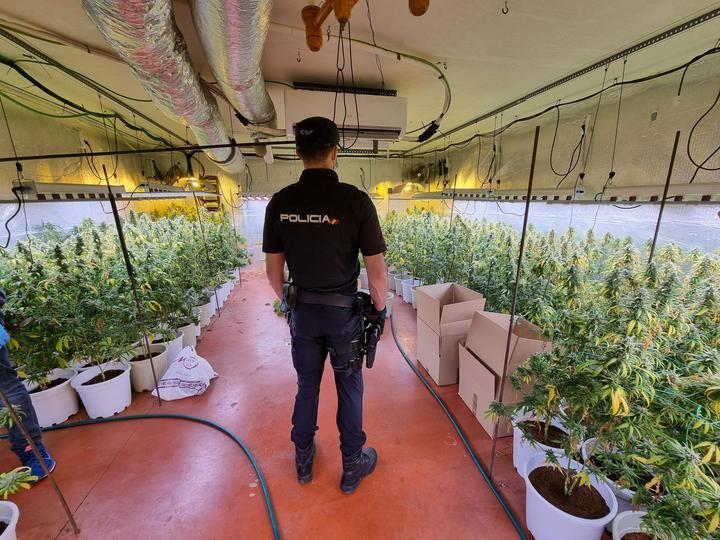 """La Policía Nacional desmantela una nueva plantación """"indoor"""" de marihuana en una nave industrial de Fontanar"""