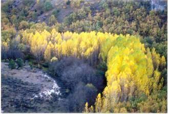 Brihuega vierte directamente las aguas sin depurar al río Tajuña, lo que supone un gasto fijo anual muy abultado, muchas sanciones y un problema medioambiental