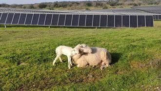 ATENCIÓN, AQUÍ HAY TRABAJO : Solaria generará más de 4.000 empleos en Guadalajara con su complejo fotovoltaico Cifuentes-Trillo 626MW