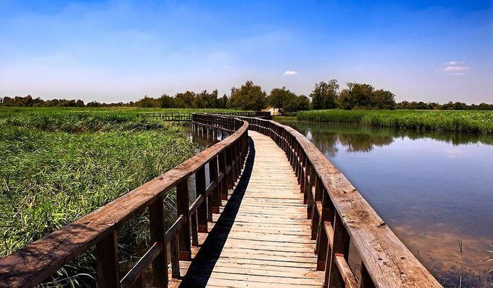 Se ralentiza el proceso de desecación de la zona inundada de las Tabalas de Daimiel