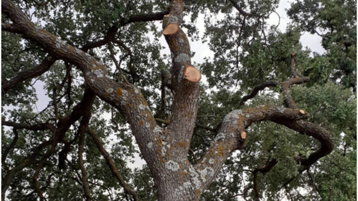 El patrimonio natural de Guadalajara atacado por la insensatez del Ministerio de Fomento