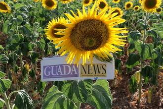 13ºC de mínima y 29ºC de máxima este primer lunes de agosto en Guadalajara
