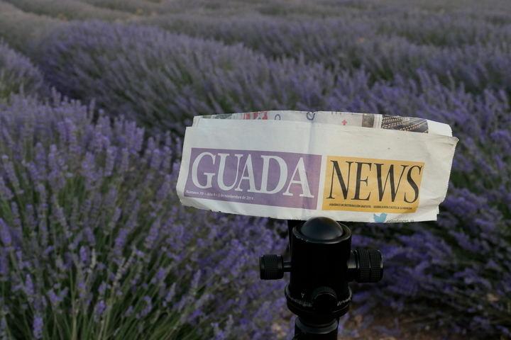 Campo de Lavanda en Brihuega. Foto : EDUARDO BONILLA