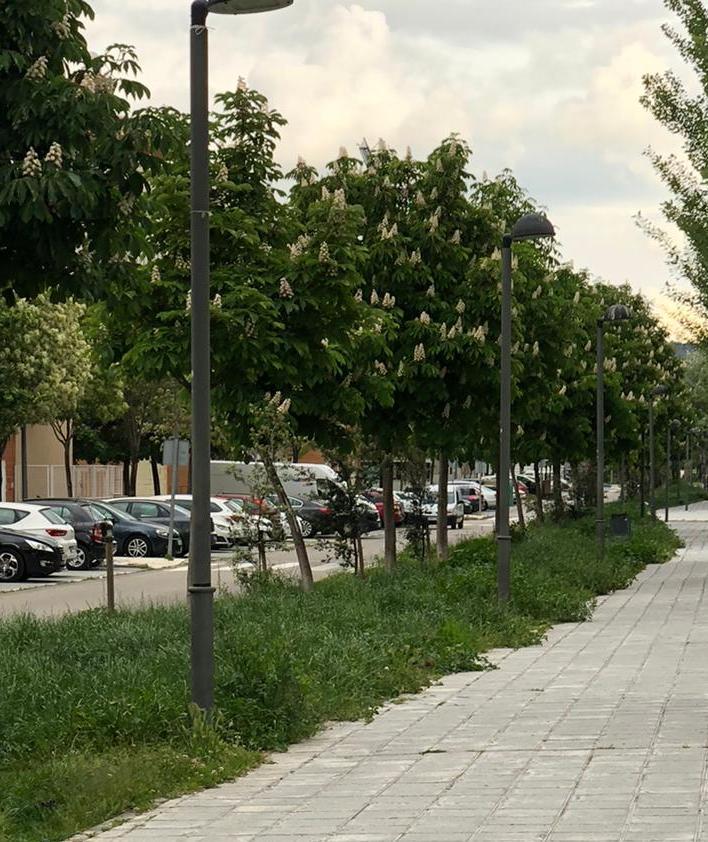 El exceso de vegetación invade parte de las aceras de las calles de Azuqueca provocando mosquitos e insectos molestos y perjudiciales para los vecinos