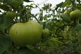 El DOCM publica hoy el decreto que regula la venta directa para productos agroalimentarios o transformados de agricultores y ganaderos en Castilla La Mancha