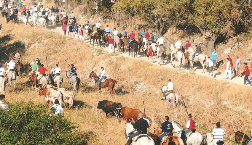 Brihuega correrá uno de los encierros más antiguos de España