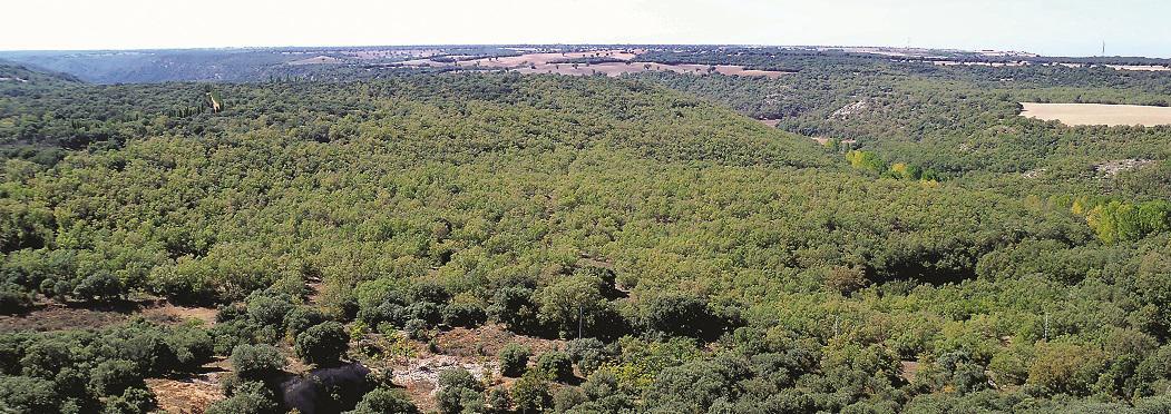 Yebes solicita un taller de empleo para 14 personas en paro que trabajarán en el bosque de Valdenazar