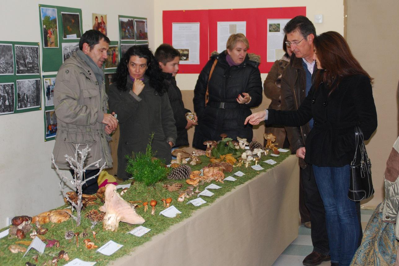 El sorprendente mundo de las setas y de los hongos se exhibe en Horche durante todo el fin de semana