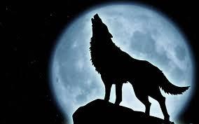Publicadas en Castilla La Mancha las ayudas para paliar los daños producidos por ataques del lobo