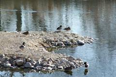 Azuqueca de Henares vuelve a organizar una visita a la Reserva con motivo del Día de los Humedales