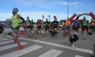 Más de 200 participantes en la carrera del Circuito de Canicross 'Diputación de Guadalajara' celebrada en Marchamalo
