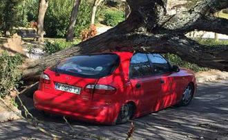 Un coche, aplastado por un árbol en el Paseo de San Roque de Guadalajara