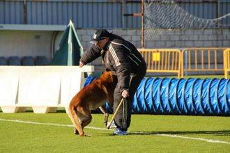 Alovera ha celebrado un campeonato de obediencia canina