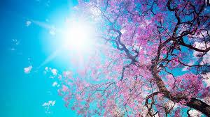 Guadalajara disfrutará de un lunes soleado con el mercurio en...¡los 23ºC!