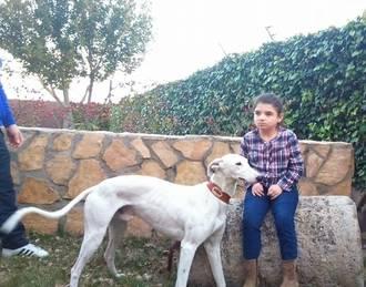 Yebra acoge este domingo una competición de galgos solidaria para ayudar a la pequeña Ana