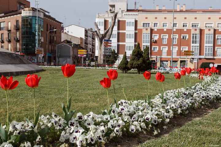 Alrededor de 40.000 flores de temporada embellecerán Guadalajara en primavera