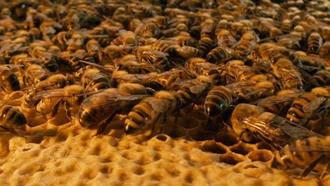 Se ponen en marcha las primeras rutas de turismo apícola en Guadalajara