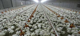Herido grave un empleado de una granja de pollos en Fuentelahiguera